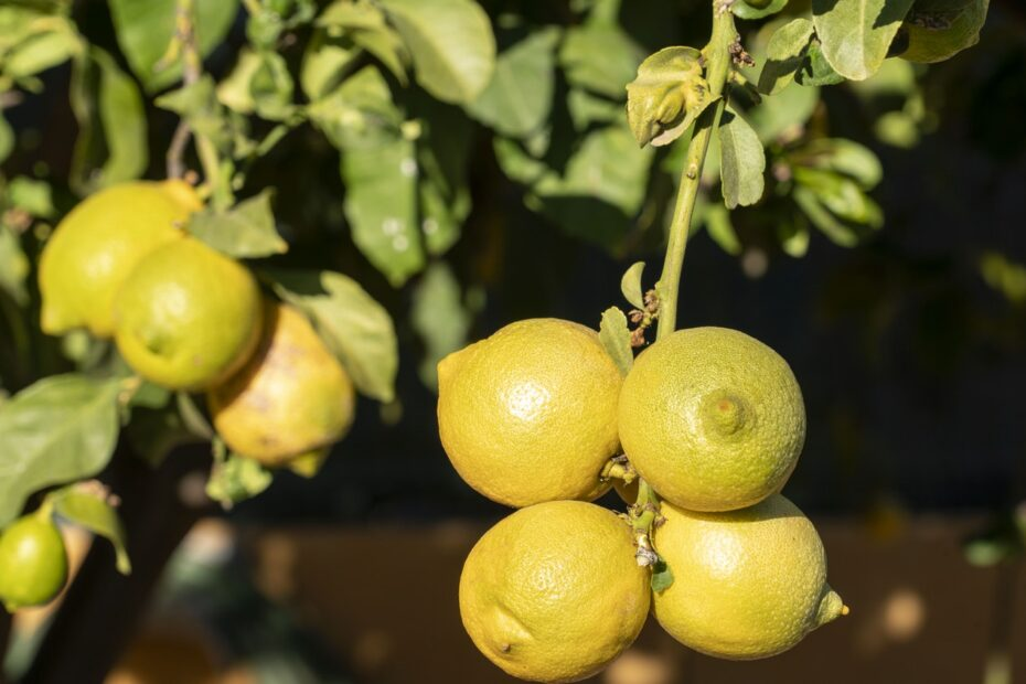 Citron entretien maison